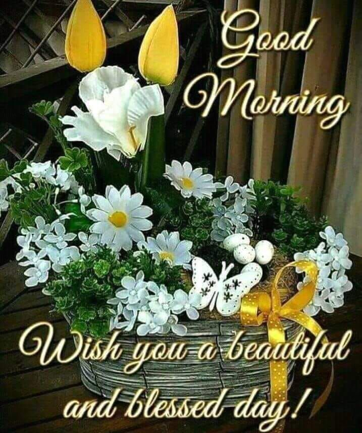200 Good Morning Images With Flowers Good Morning Images With Flowers Good Morning