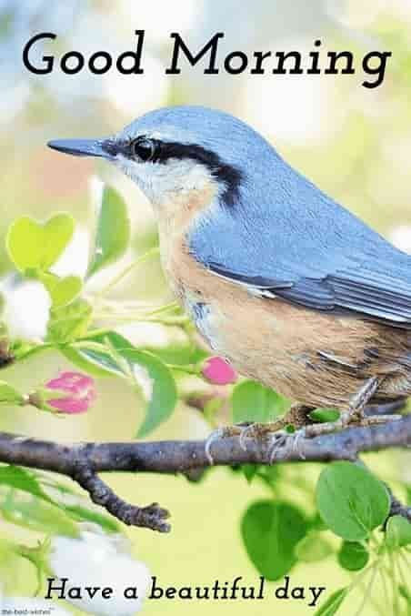 Good Morning Images With Birds And Flowers Good Morning