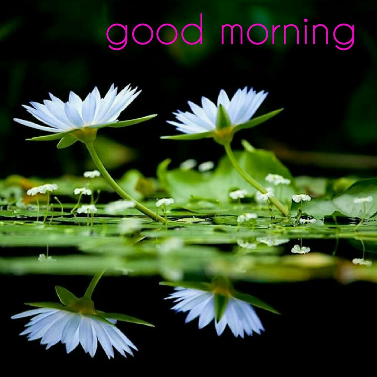 Good Morning Flower Images Free Download Good Morning