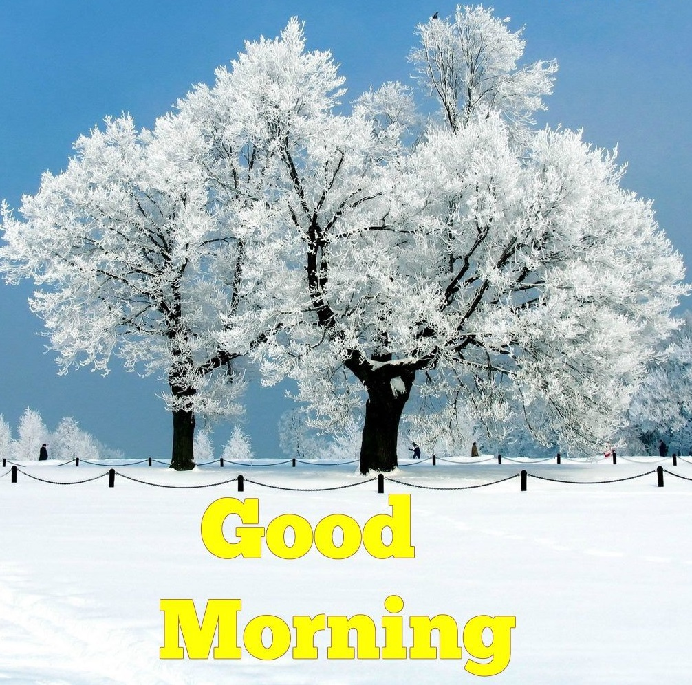 100 Best Good Morning Winter Images With Quotes Good Morning