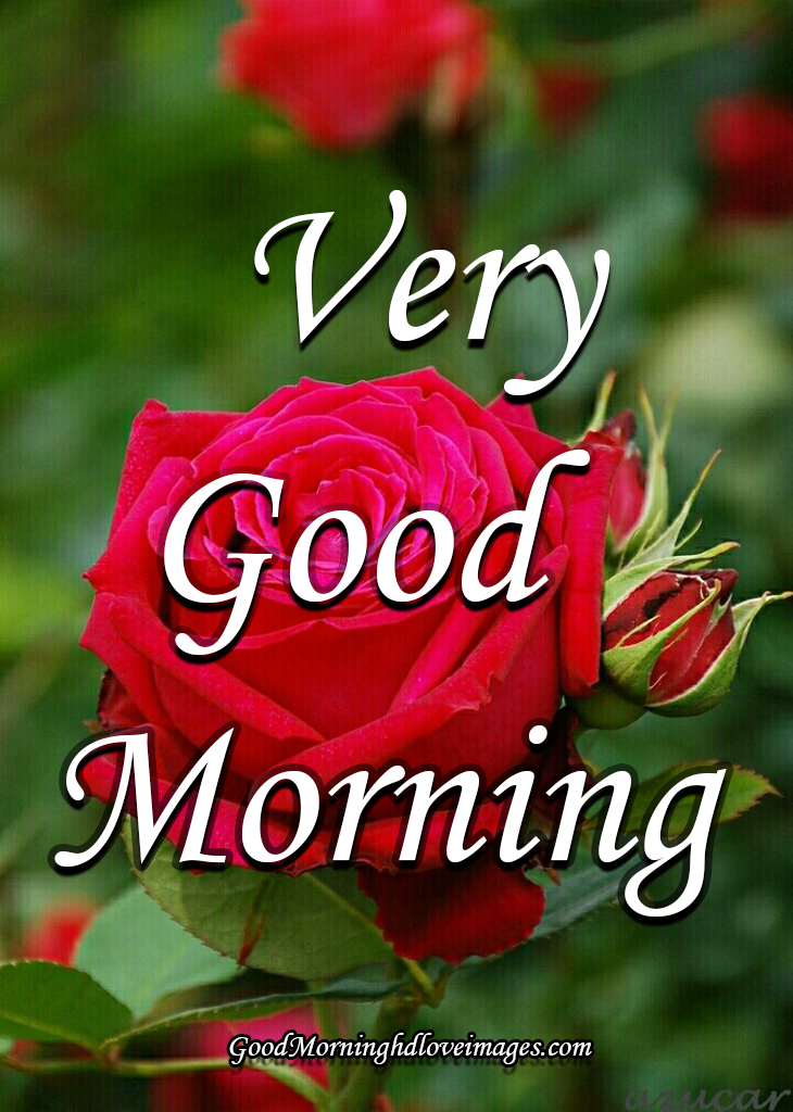 Best Good Morning Images With Rose Flowers Free Download Hd Good Morning