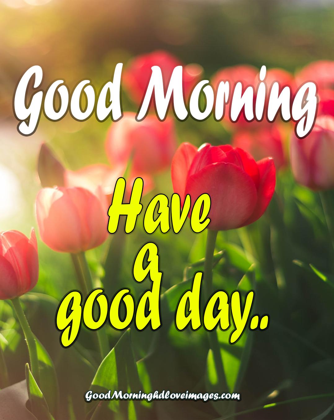 Good Morning Flower Images Free Download Good Morning